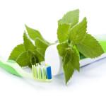 Dentifrice herbal